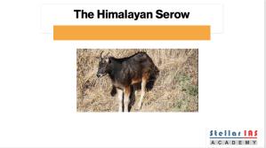 himalayan serow